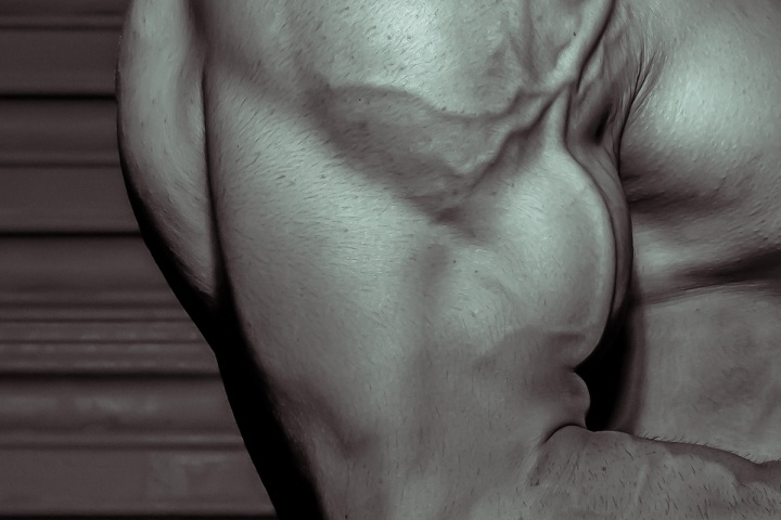Muscle Study: The Biceps Muscle