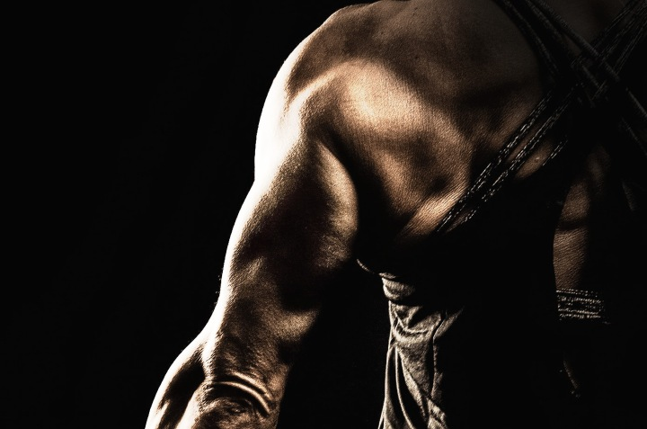 Muscle Study: The Triceps Muscle